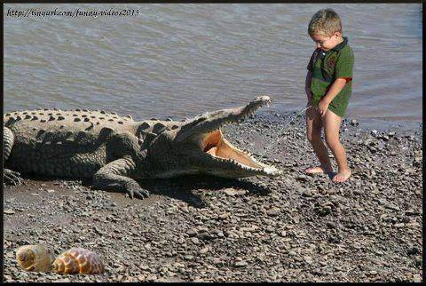Funny Crocodile And Baby Wallpaper